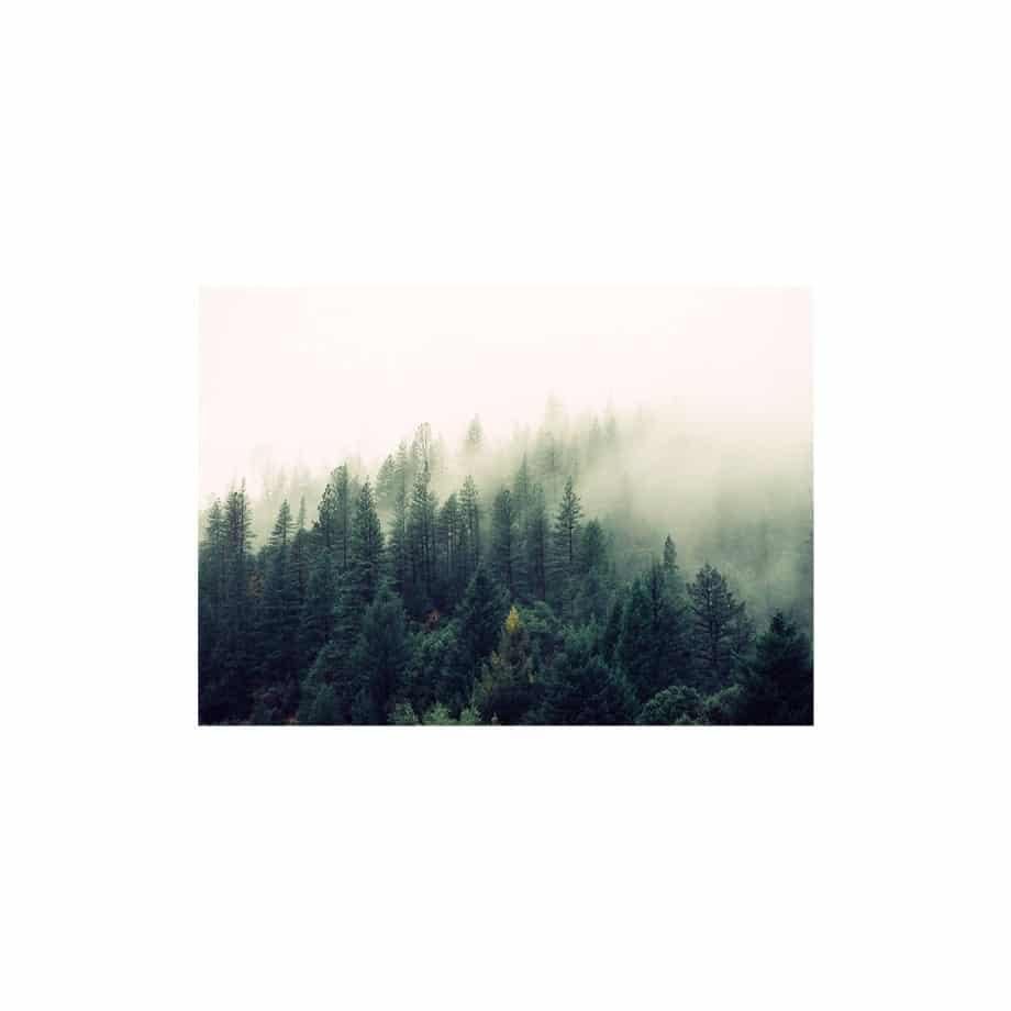 Cuadro paisaje bosque de niebla