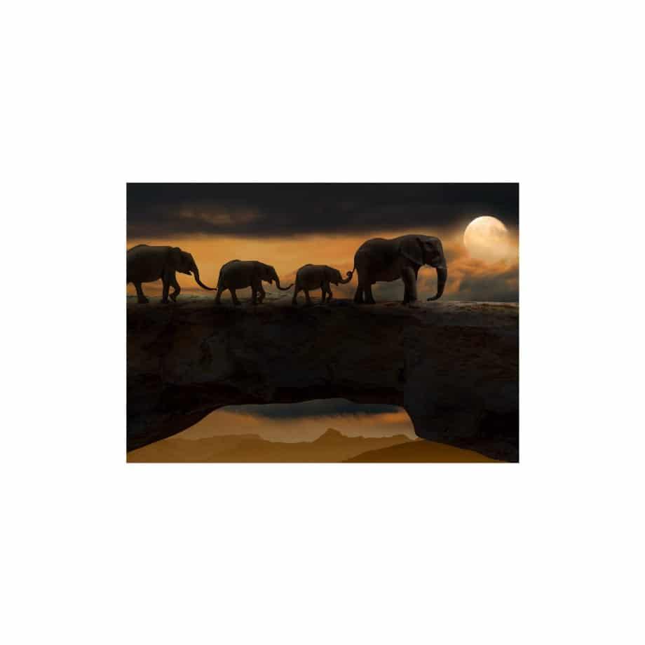 Cuadro decorativo animales elefantes