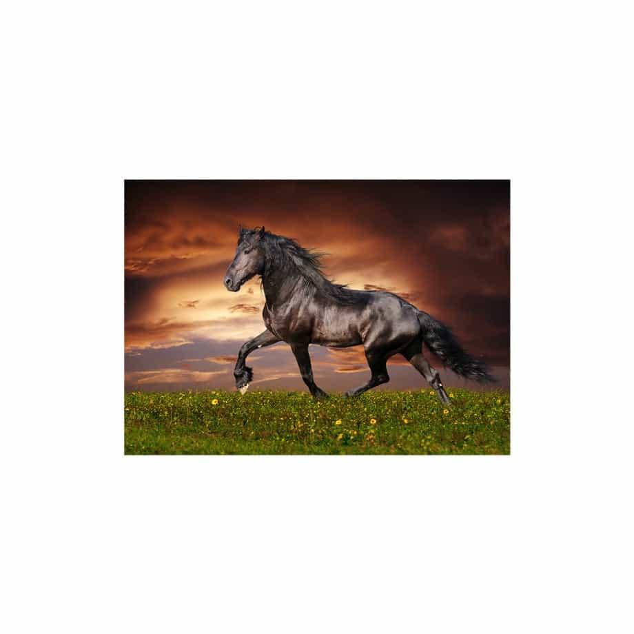 Cuadro caballo galopando