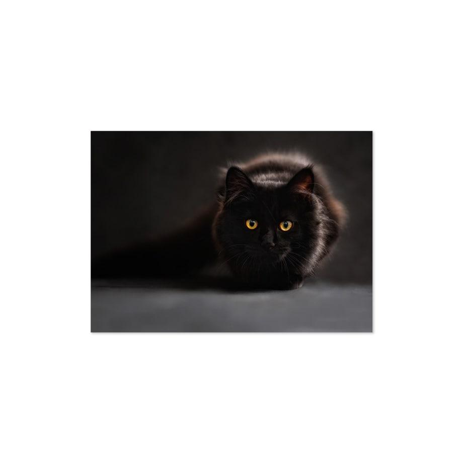 Cuadro gato negro