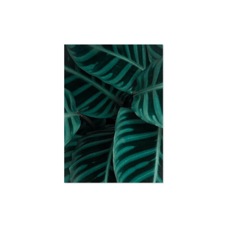 Cuadro hojas closeup