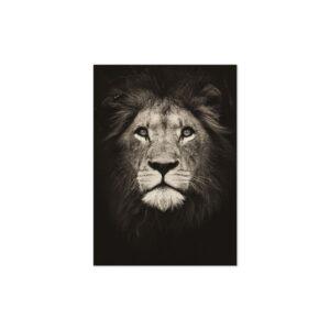 Cuadro león blanco y negro