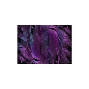 Cuadro textura plumas